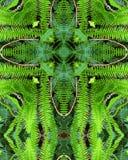 fern krzyżowa Fotografia Royalty Free