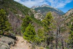 Fern Lake Trail met Stenen Piekberg op de achtergrond Royalty-vrije Stock Afbeeldingen
