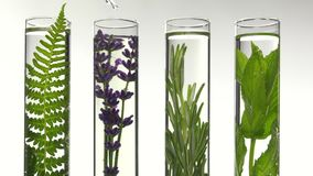 Fern, lavender and mint in test tubes stock footage