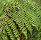 Fern leaf Stock Photo