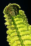 fern leaf στοκ εικόνες