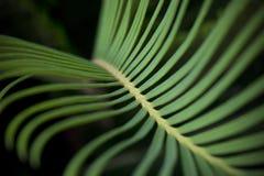 Fern leaf Royalty Free Stock Photos