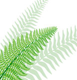 Fern leaf. Vector green fern leaf with background leaf silhouettes Royalty Free Stock Photos