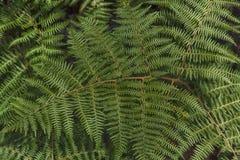 Fern leaf. Close up of a fern leaf Royalty Free Stock Images