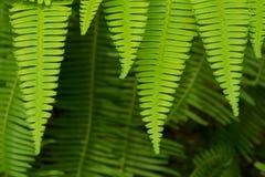 Fern Leaf Stockfoto