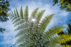 Fern Leaf Fotografía de archivo