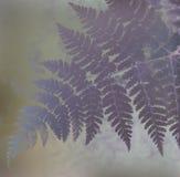 Fern Leaf Arkivbild
