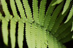 Fern Leaf Stockfoto