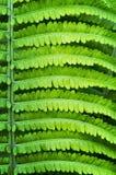 Fern Leaf Photo stock