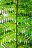 Fern Leaf Image stock