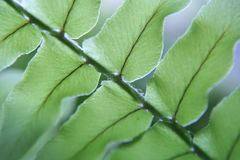 Fern leaf. Close up of fern leaf Stock Images