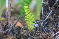 Fern Leaf Lizenzfreie Stockfotografie