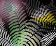 Fern leaf. An image showing three green and white color fern leaves on a dark jungle background Royalty Free Stock Images