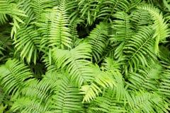 Fern Leaf foto de stock