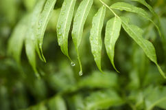 Fern Leaf Arkivbilder