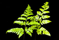 Fern Leaf Photos stock