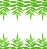 Fern Leaf Stock Foto
