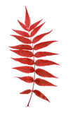 Fern Leaf Stock Foto's