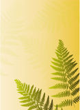 Fern leaf. Illustration with two green fern leaf silhouettes Royalty Free Stock Photography