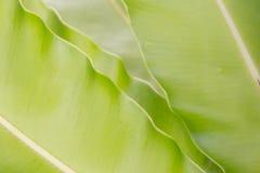 Fern Leaf Royalty-vrije Stock Afbeelding
