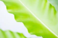 Fern Leaf Stock Fotografie