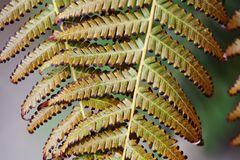 Fern leaf aging process. Abstract organic floral pattern background. close-up photography, selective focus Stock Images