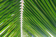 Fern leaf background Stock Images