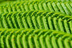 Fern leaf Stock Photography