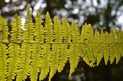 Close up of fern leaf Stock Images