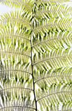 Fern leaf background Stock Photo