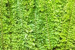 Fern leaf background close up Stock Images