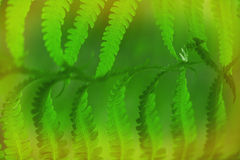 Fern leaf background Royalty Free Stock Images