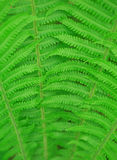 Fern leaf background Royalty Free Stock Photo