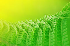 Fern leaf background Stock Image