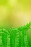Fern leaf background Stock Photography
