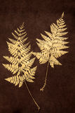 Fern Leaf Beauty Royaltyfri Foto