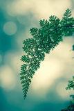 Fern leaf  and bokeh Stock Photos