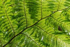 A fern leaf. Bottom of a fern leaf Stock Image