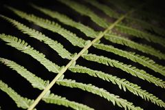 Fern Leaf Branch Abstract-Close-up Royalty-vrije Stock Afbeeldingen