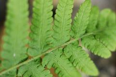 Fern Leaf Stock Photos