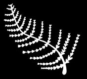 Fern leaf bw. Abstract white fern leaf Stock Photos