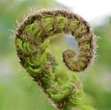 Fern leaf close up light background Stock Images
