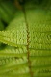 Fern leaf close-up. Narroe depth of field, close-up shot of green fern leaf stock images