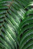 Fern leaf close-up. Spot light on fern leaf Royalty Free Stock Image
