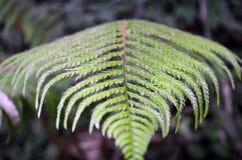 Fern Leaf close upp royaltyfri bild