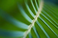 Fern leaf closeup Royalty Free Stock Image