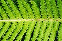 Fern leaf closeup. Bright fern leaf macro with dark background Stock Image