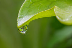 Fern leaf with drop of water Stock Photos