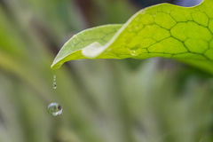 Fern leaf with drop of water Stock Image