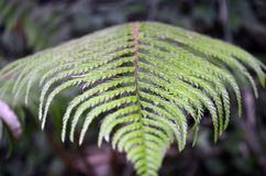 Fern Leaf Fine in su Immagine Stock Libera da Diritti